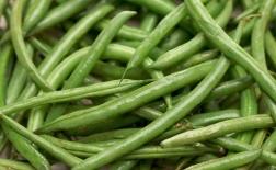 روش کاشت لوبیا سبز