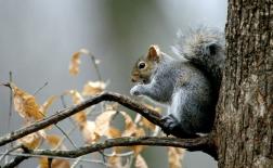 سنجاب  | Squirrel