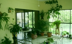 آموزش نگهداری و پرورش گل و گیاه در خانه