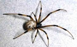 حشرات بد: شناسایی حشرات بد و جای نیش آنها