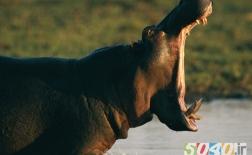 ده حیوان خطرناک روی زمین