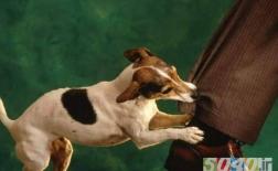 گاز گرفتگی توسط حیوانات
