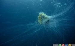 طبیعت زیر آبی، زندگی دریایی، و زمینشناسی جزیره آیلی Islay