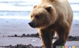 برترین مناطق رویارویی با حیوانات در حیاتوحش