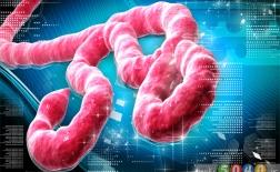 ده شایعه در مورد ویروس ایبولا