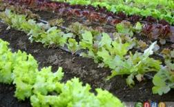 جدول برنامهریزی کاشت سبزیجات