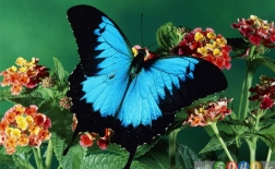 گلهایی که باعث جذب پروانهها به باغچه شما میشوند
