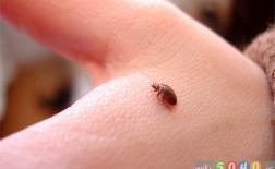 حشرات و نیش آن ها