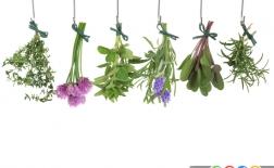 3 گیاه موثر در پیشگیری از سرطان پوست