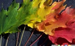 چرا رنگ برگ ها در پاییز عوض می شود؟