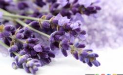 5 گیاه با خاصیت دارویی