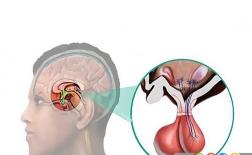 هورمون پرولاکتین چیست ؟
