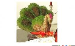 کاشت سبزه عید به شکل طاووس