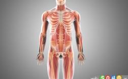 چیزهایی که در مورد استخوان هایتان نمی دانید