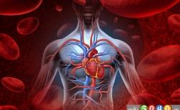 خوراکی های مفید برای تصفیه خون