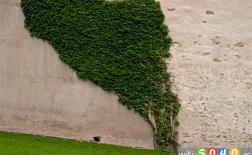 گیاهانی برای تصفیه هوا