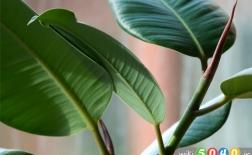 گیاهانی که خانه ی شما را سالم تر می کنند