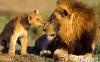 ده گربهسان بزرگ و جالب دنیا