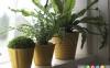 بهترین گیاهان خانگی برای هر فضا در خانه