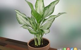 نکات  مراقبت از گیاهان خانگی