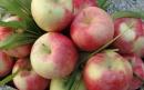 طرز تهیه مربای سیب گلاب