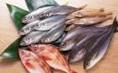 نکات مهم در مورد شناخت ماهی تازه