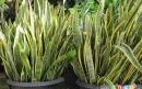 گیاهان آپارتمانی که هوا را تمیز میکنند