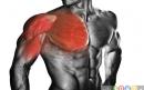 5 حرکت عالی برای پرورش عضلات سینه