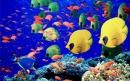 10 حقیقت جالب درباره ماهی ها