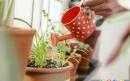 شش راه برای سرحال کردن گیاهان پژمرده
