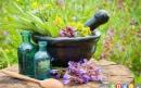 بهترین گیاهان برای کاهش درد 2