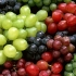 روش کاشت انگور