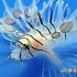 شیرماهی (با نام خروس ماهی نیز شناخته میشود)