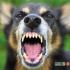 چگونه خود را از حمله سگ نجات دهیم
