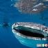 9 عدد از بزرگترین موجودات دریایی