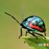 غذاهایی که حشرات را از شما دور می کنند