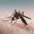 راه های موثر برای پیشگیری از نیش حشرات