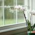 بهترین گیاهان خانگی برای هر فضا در خانه 2