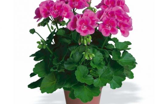 نکته های نگهداری از گیاهان آپارتمانی از زبان متخصصین 1