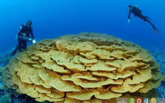 گالری حیوانات: مرجانها
