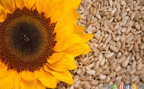 فواید غذایی تخمه آفتابگردان