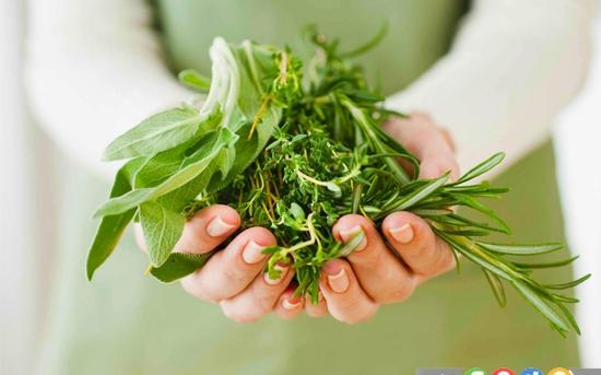 گیاهان دارویی برای درمان برونشیت