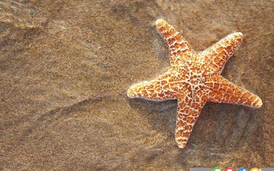 10 حقیقت جالب درباره ستاره های دریایی