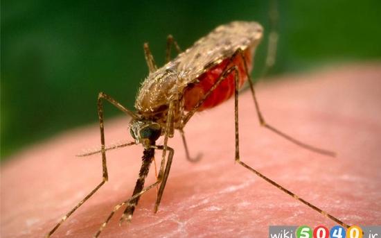 غذاهایی که حشرات را از شما دور می کنند 2