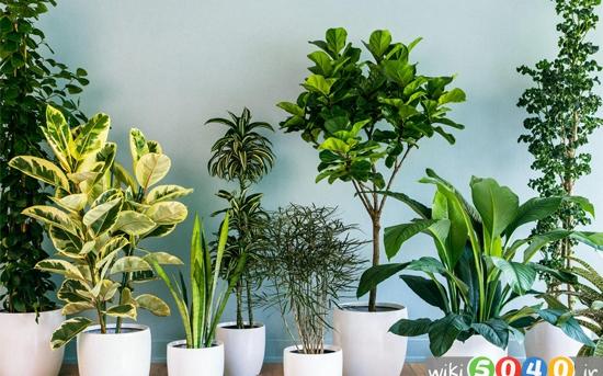 گیاهان خانگی خطرناک برای کودکان