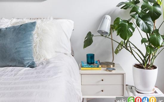 گیاهان کلیدی برای خواب خوب شب