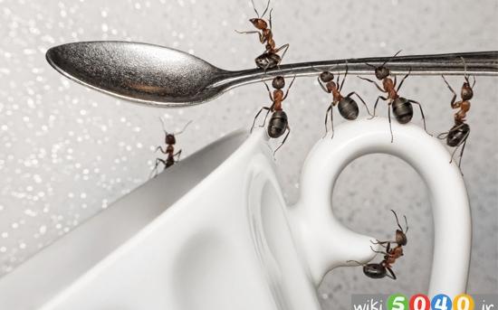 چگونه از مورچه ها در خانه راحت شویم